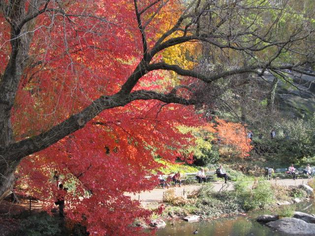 秋のニューヨークの楽しみ方 | ニューヨークナビ